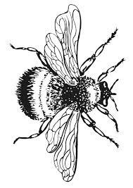 17 bumble bee coloring pages bumble bee coloring pictures 1