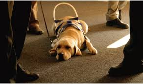 Comfort Pet Certification Service Animals And Emotional Support Animals Ada National Network