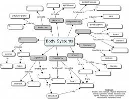 Human Anatomy Integumentary System Human Male Integumentary System Map Human Anatomy Lesson