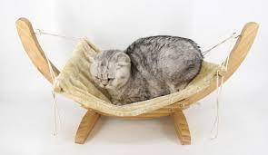 rock a bye cat hammock u2013 cat and kitten joy