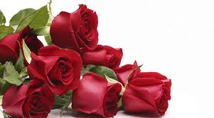 roses images collection 43