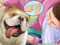 How to Help Your Dog Through a Stroke with wikiHow