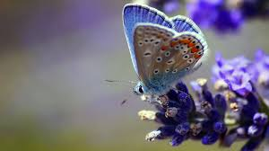 butterfly flower butterfly flower wings hd animals 4k wallpapers images
