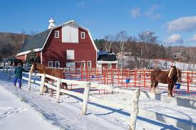 how to be a responsible horse owner 14 tips to help keep your horse happy and healthy in cold weather