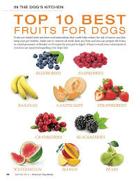 Healthy Kitchen Dog Food by 17 Best Dog K9 Raw Food Images On Pinterest Raw Dog Food Food
