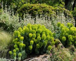 plants archive page 7 of 36 inland valley garden planner