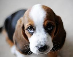 Puppy Eyes Meme - sad puppy dog eyes meme generator