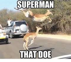 Doe Memes - superman that doe doe meme on me me