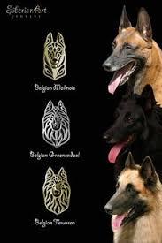 belgian sheepdog youtube belgian shepherd dog tervueren these animals have all the
