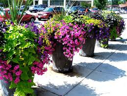 Plant Combination Ideas For Container Gardens - 997 best amazing garden planters urns images on pinterest