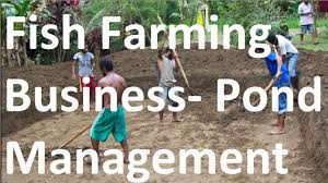 how to start fish farming business pond management youtube