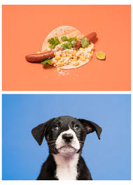 the dog days of summer munchies