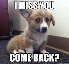 I Miss U Meme - come back i miss you miss you corgi quickmeme