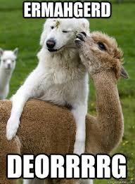 Alpaca Meme - berks alpaca memes quickmeme