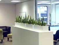sydney indoor plant hire photo gallery