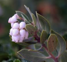 san diego native plants drought tolerant plants for a vista or san marcos area garden