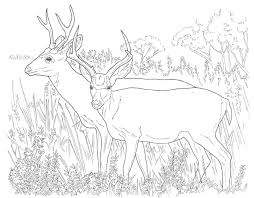 harddeer coloring pages coloring page