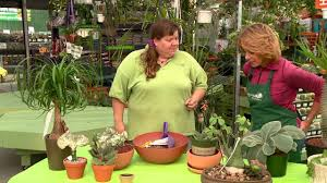growing specialty succulents indoors by tagawa gardens youtube