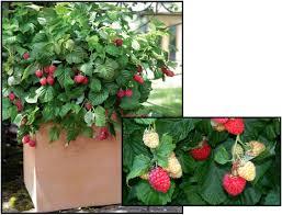 berri native plants plant finder hinsdalenurseries com