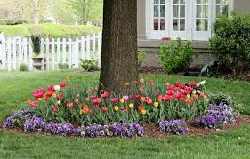 5 prime spots to beautify your yard with flower bulbs preen