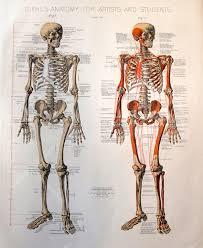 Google Human Anatomy 71 Best Anatomy References Images On Pinterest Anatomy Reference