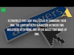 how ultraviolet light kills bacteria why does uv light kill bacteria youtube