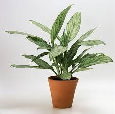 Low Light Indoor Flowers 171 Best Gardening Indoor Plants Images On Pinterest Indoor