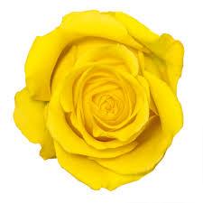 Bulk Flowers Online Yellow Flowers Online Bulk Flowers Fedex Flowers U2013 Tagged