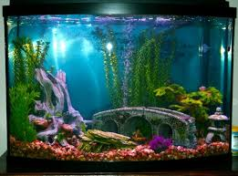 the 25 best best fish tanks ideas on best aquarium