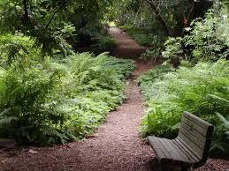 Urban Gardens San Francisco - sf botanical garden 75th anniversay funcheapsf com