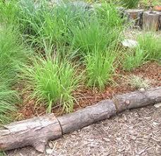 best 25 garden borders ideas on pinterest flower bed borders