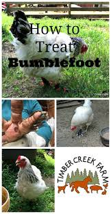 treating bumblefoot in chickens chicken coops homemade coops