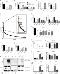 complement pathway amplifies caspase 11 u2013dependent cell death and