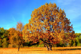 brown tree free photo tree fall fall colors free image on pixabay 99852