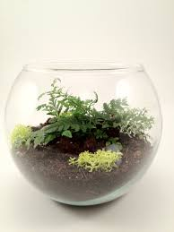 56 best terrarium images on pinterest terrarium ideas mini