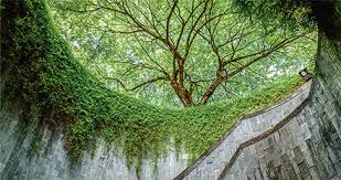 benefits of trees in tropical cities science
