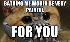 I Can Haz Meme Generator - i can haz best funny cat memes pressroomvip part 33