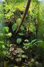 Dramatic Aquascapes Fake Tree Root Background Terrarium Like Pinterest
