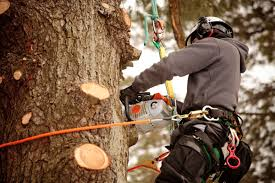 hiring an arborist 20 things to know reader u0027s digest reader u0027s