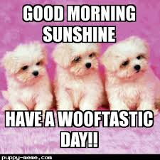 Cute Puppies Meme - good morning meme
