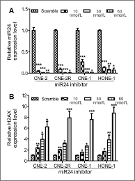 10 30 by Involvement Of Microrna 24 And Dna Methylation In Resistance Of