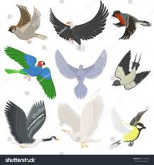 set different wing wild flying birds stock vector 581134129