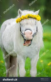portrait funny smiling shetland pony wreath stock photo 376507858