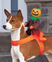 Dogs Halloween Costume Spooky Halloween Rider Costumes Dogs