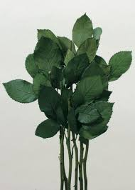 preserved roses preserved leaf stems preserved roses afloral