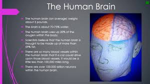Anatomy And Physiology Of The Brain The Psychology U0026 Physiology Of The Human Brain Youtube
