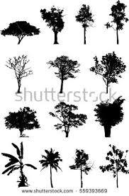 black tree silhouettes on white background stock photo 555994909