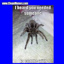 Funny Spider Meme Pictures To - clean funny images clean memes the best the most online page 155