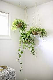Plants And Planters by Best 25 Bedroom Plants Ideas On Pinterest Plants In Bedroom