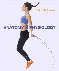 Fundamentals Of Anatomy And Physiology 9th Edition Download Martini U0026 Bartholomew Essentials Of Anatomy U0026 Physiology 7th Edition